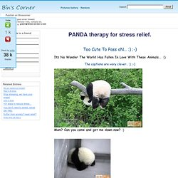 PANDA therapy for stress relief. - StumbleUpon