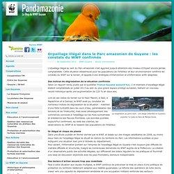 Orpaillage illégal dans le Parc amazonien de Guyane : les constats du WWF confirmés