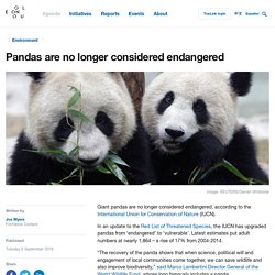Pandas are no longer considered endangered