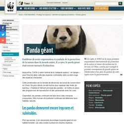 Pandas géants