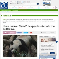 Huan Huan et Yuan Zi, les pandas stars du zoo de Beauval