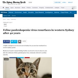 SYDNEY MORNING HERALD 08/02/17 Feline panleukopenia virus resurfaces in western Sydney after 40 years