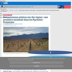 Des panneaux solaires sur des vignes : une première mondiale dans les Pyrénées-Orientales