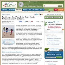 Pantethine – Boost Your Brain, Cardio Health, Metabolism, and Detoxification