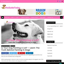 Is Your Dog Panting a Lot? – Learn the Truth Behind Panting in Dogs