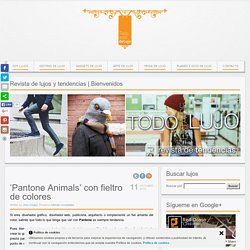 Pantone Animals con fieltro de colores