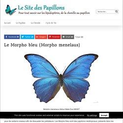 Le Site des Papillons