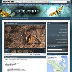 Papillon monarque - Humanima - Découverte