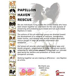 Papillon Haven Rescue - Rescued Papillons for immediate adoption