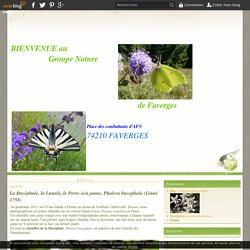 papillons - Le blog du groupe nature
