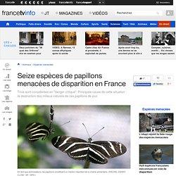Seize espèces de papillons menacées de disparition en France