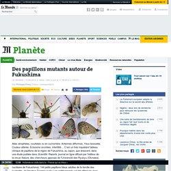 Des papillons mutants autour de Fukushima