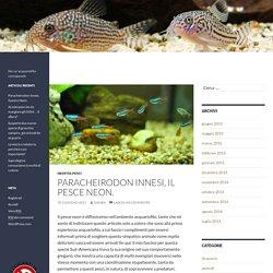 Paracheirodon innesi, il pesce Neon.