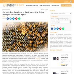Chronic Bee Paralysis is Destroying the Entire Honeybee Colonies Again