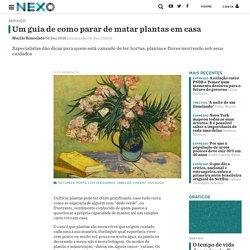 Um guia de como parar de matar plantas em casa - Nexo Jornal