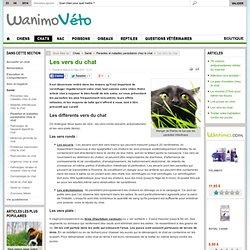 Parasites et maladies parasitaires chez le chat - Les vers du chat par les vétérinaires de Wanimo