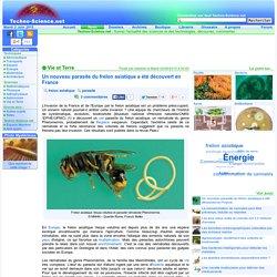 Un nouveau parasite du frelon asiatique a été découvert en France