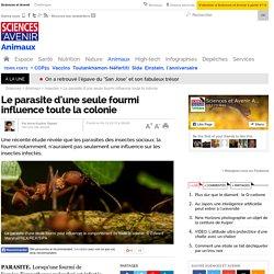 Le parasite d'une seule fourmi influence toute la colonie