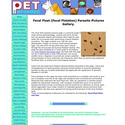 Fecal Float Parasite Pictures Gallery.