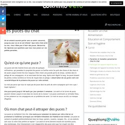Les puces du chat - Parasites et maladies parasitaires chez le chat - Santé - Chats