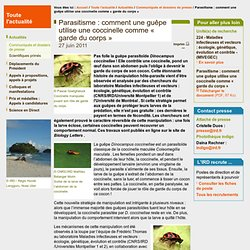 Guepe les insectes des jardins pearltrees - Jardiniere comme garde corps ...