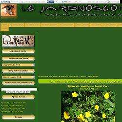 JardinOscope, toute la flore et la faune de nos parcs et jardins - Le