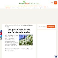 Fleurs parfumées : les plus belles floraisons odorantes – Jardiner Malin
