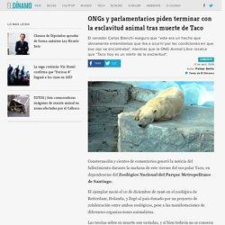 ONGs y parlamentarios piden terminar con la esclavitud animal tras muerte de Taco