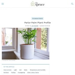 Parlor Palm Plant: Care and Growing Guide