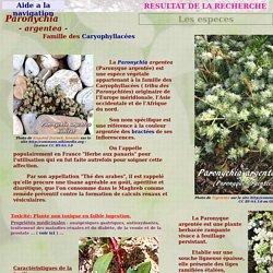 Paronychia argentea - Paronyque argentée