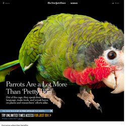 Parrots Are a Lot More Than 'Pretty Bird'