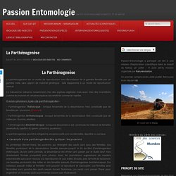 La parthénogenèse chez les insectes, types et exemples