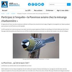 Participez à l'enquête « la Poxvirose aviaire chez la mésange charbonnière »