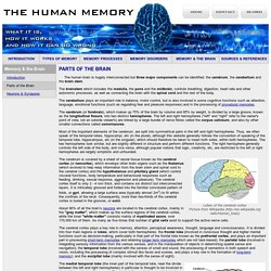 Parts of the Brain - Memory & the Brain