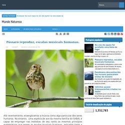 Pássaro reproduz, escalas musicais humanas.