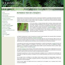 Fernatic, le site des passionnés de fougères : Reproduction
