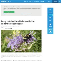 Rusty patched bumblebee added to endangered species list