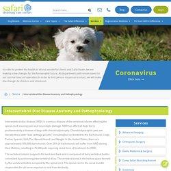 Female Dog Reproductive Anatomy Therapy - SafariVet