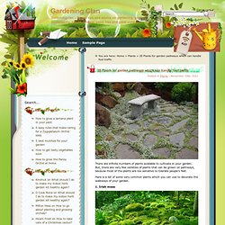 20 Plants for garden pathways which can handle foot traffic » Gardening Clan
