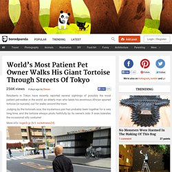 Pet Owner Walks His Giant Tortoise Through Streets Of Tokyo