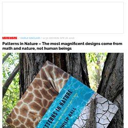 Patterns in Nature – The most magnificent designs come from math and nature, not human beings / Boing Boing