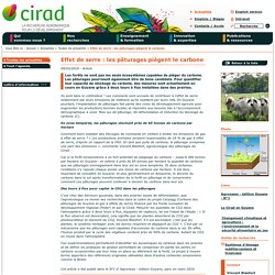 Effet de serre : les pâturages piègent le carbone