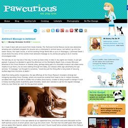 Pawcurious: With Veterinarian and Author Dr. V