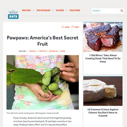 Pawpaws: America's Best Secret Fruit