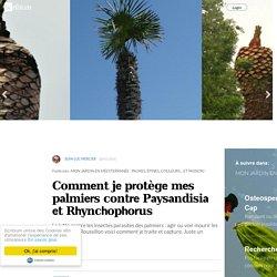 Comment je protège mes palmiers contre Paysandisia et Rhynchophorus
