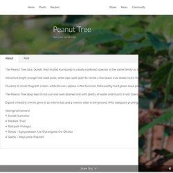 Peanut Tree - Sterculia quadrifida - Tucker Bush