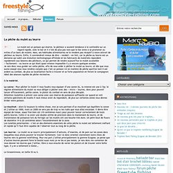 La pêche du mulet au leurre – freestyle-fishing.com
