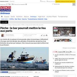 Pêche : le bar pourrait mettre le feu aux ports
