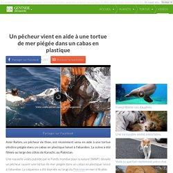 Un pêcheur vient en aide à une tortue de mer piégée dans un cabas en plastique