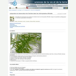 sciences de la vie et de la terre - préparation et observation de l'amidon dans les chloroplastes d'Elodée